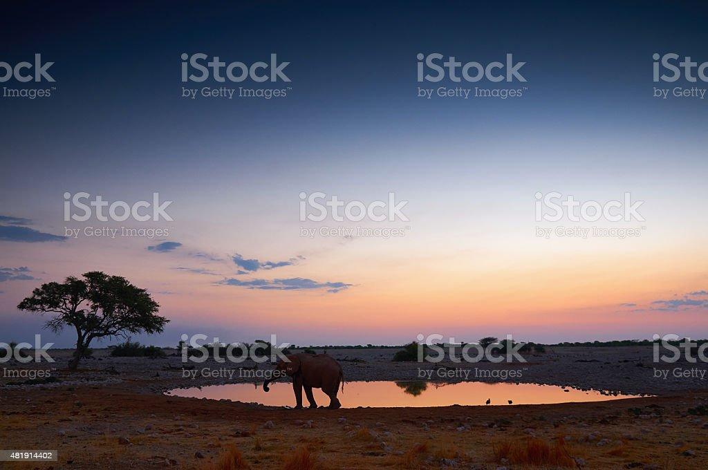 The waterhole of Okaukuejo at sunset stock photo