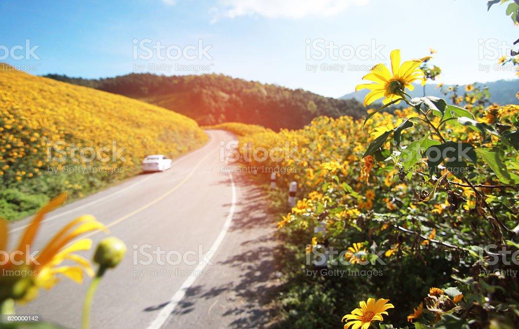 The way forward, Highway road, Wayside Flowers. stock photo