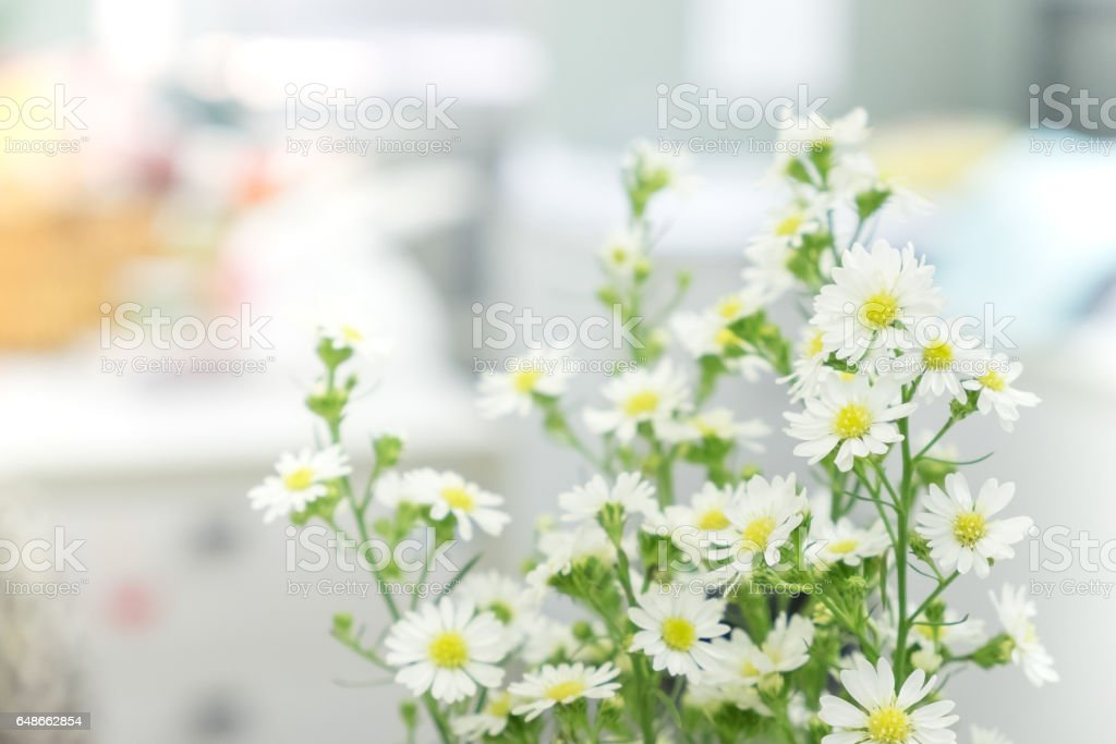 the white cutter flower in the vase on blur office background. stock photo