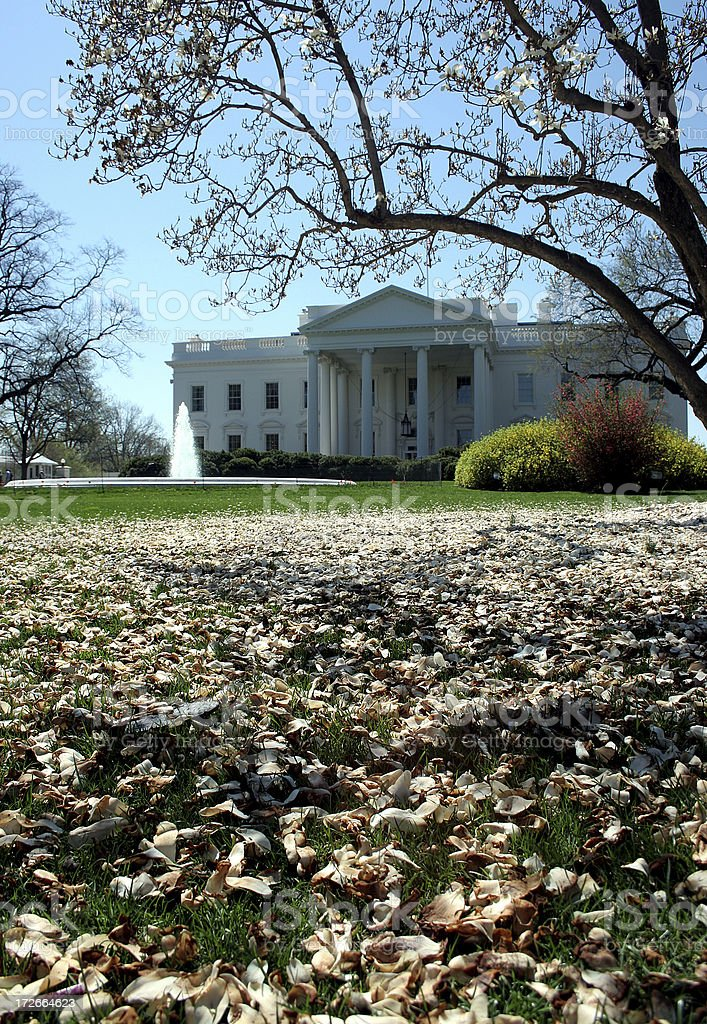the white house and gardens royalty-free stock photo