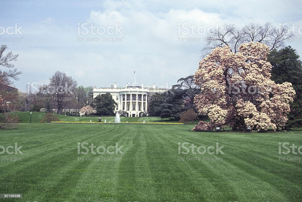 The White House in spring royalty-free stock photo