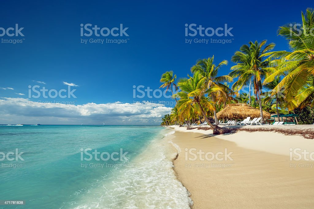 The white sands and palm trees of a tropical beach stock photo