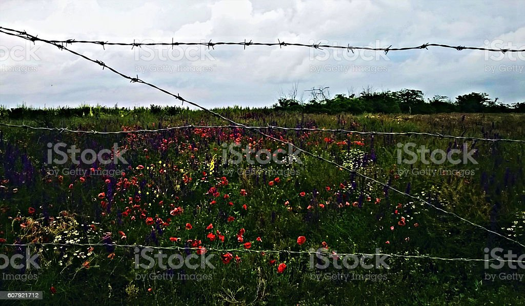 The wild nature behind a steel barbed wire stock photo