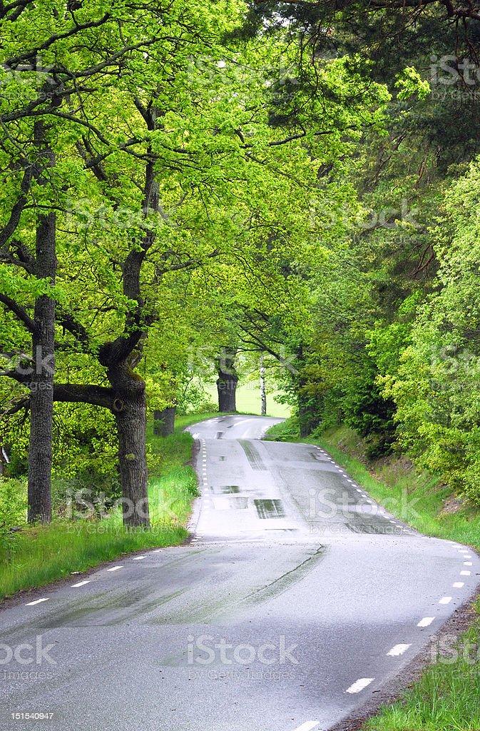 The winding road ahead stock photo