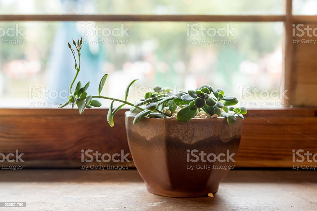 The window of Succulents stock photo