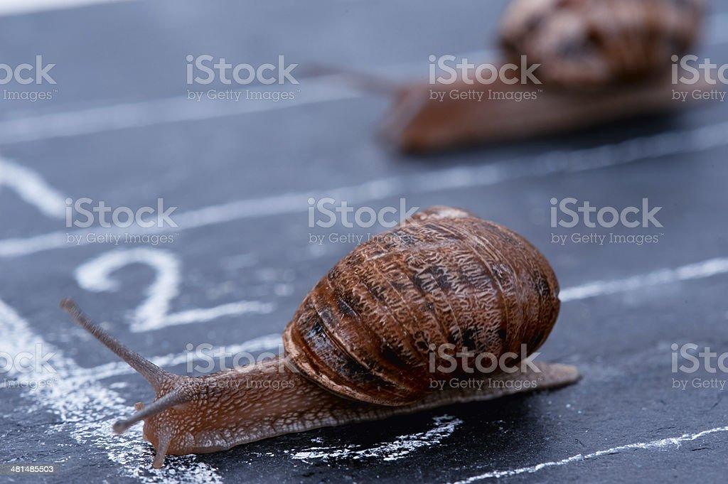 The winner snail crosses the finish line royalty-free stock photo