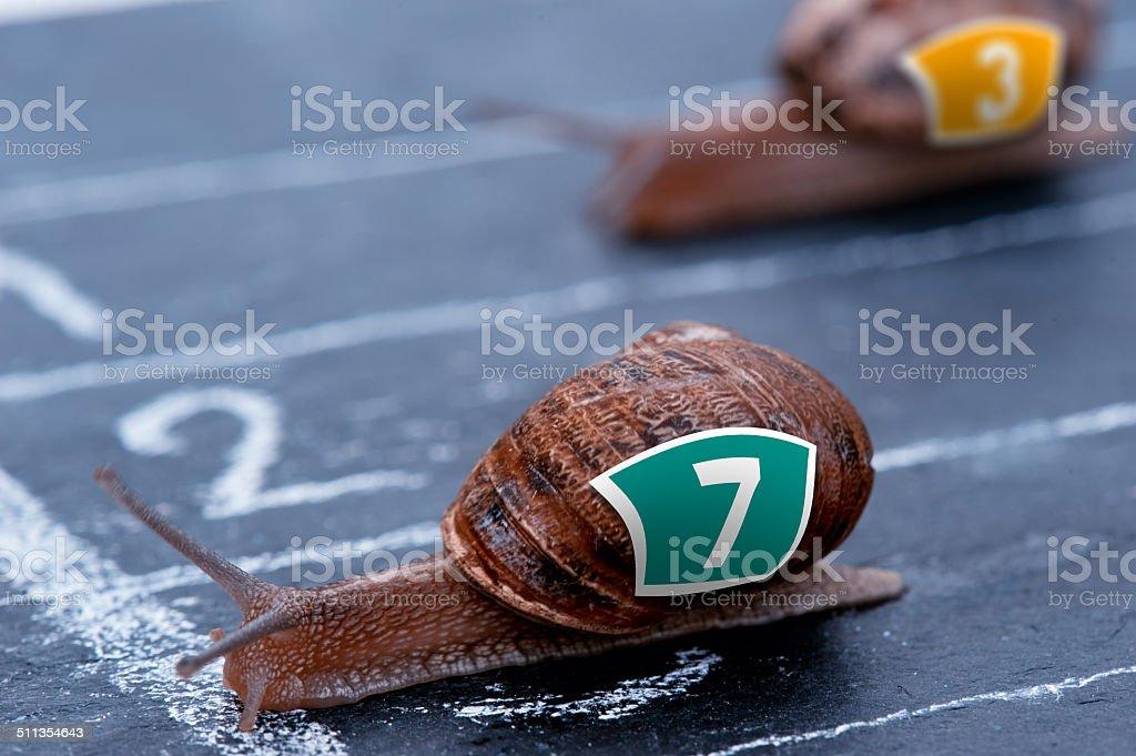 The winner snail crosses the finish line stock photo