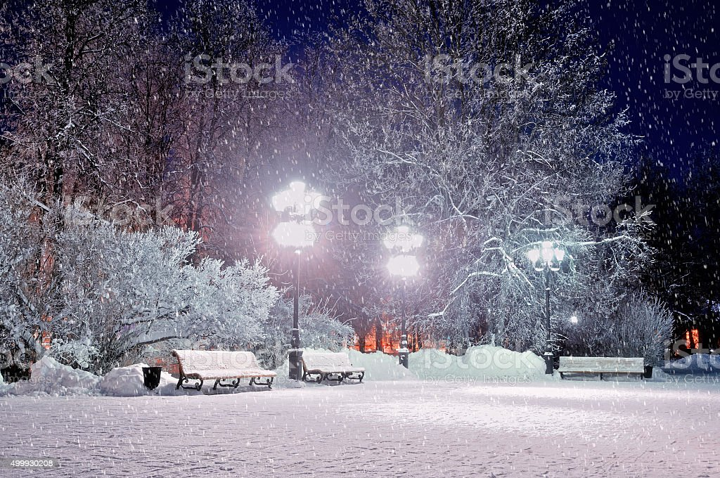 The winter evening in the park stock photo