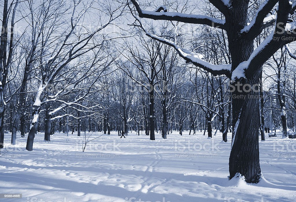 The winter park royalty-free stock photo