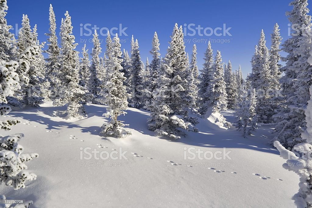 The winter wood with harel trace. stock photo