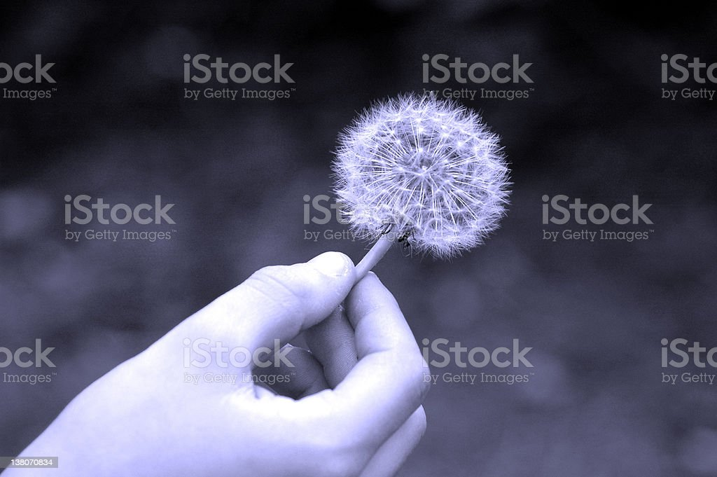 The Wish royalty-free stock photo