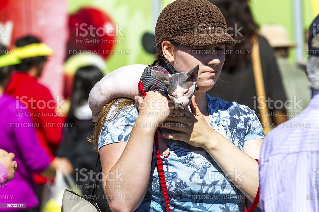 The woman hold cat of a sphinx (peterbold) royalty-free stock photo