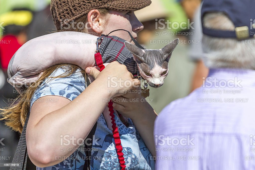 The woman hold cat of a sphinx (peterbold) stock photo