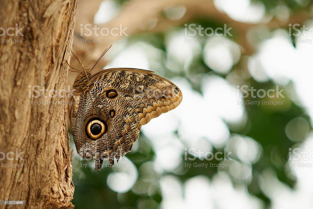 The wonderful world of butterflies stock photo