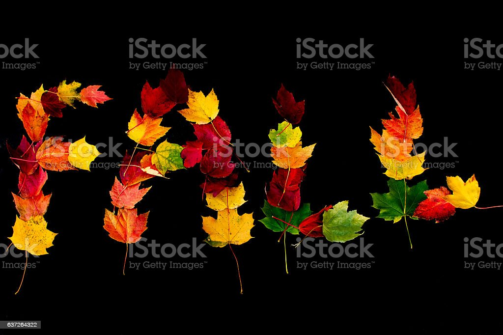 The Word Fall written out in autumn leaves stock photo