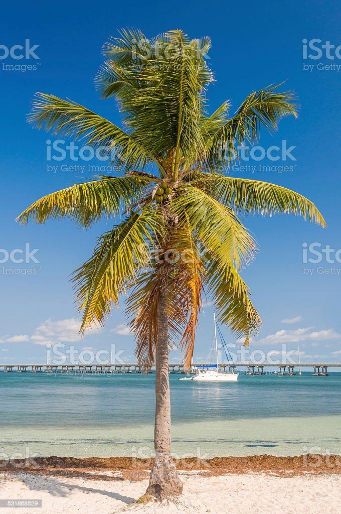 The yacht in the bay of Bahia Honda Key stock photo