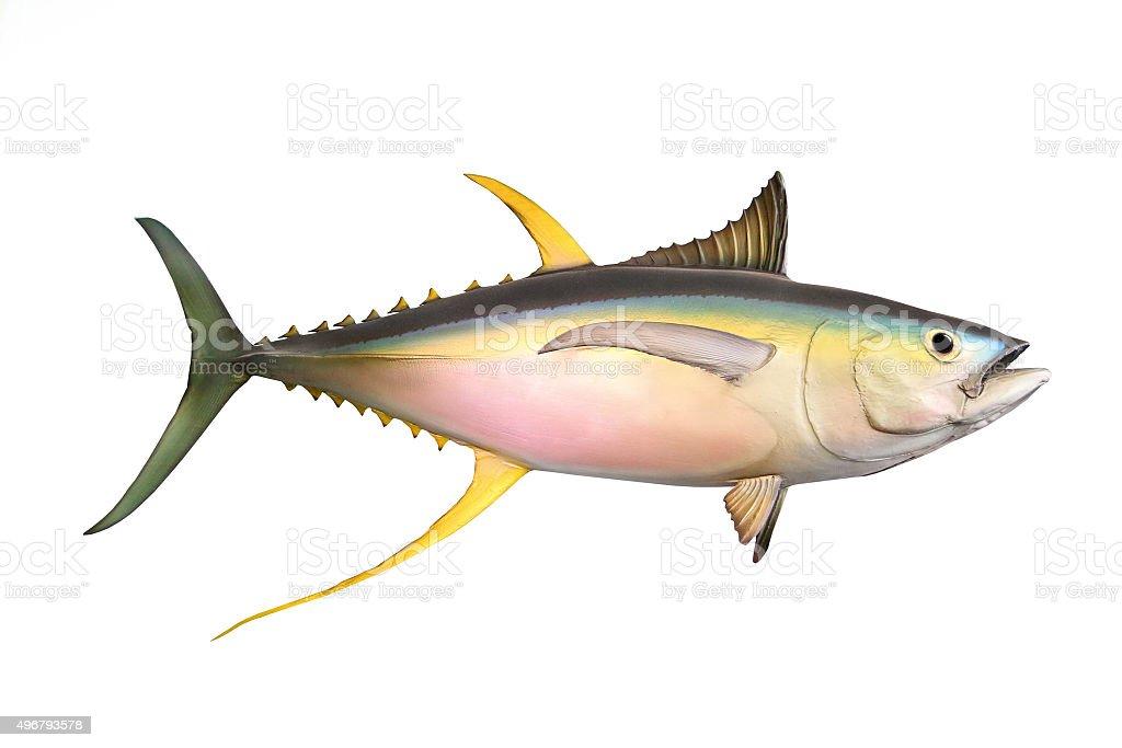 The Yellow Fin Tuna. stock photo
