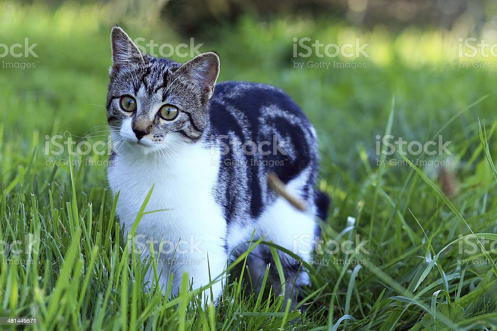 the young cat royalty-free stock photo