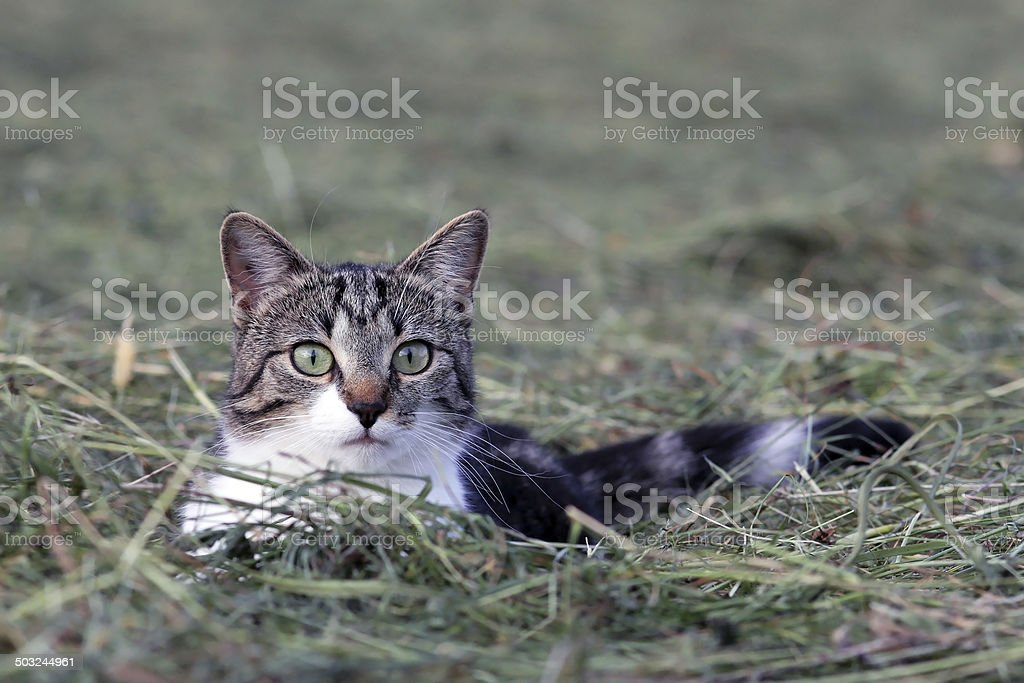 the young cat stock photo