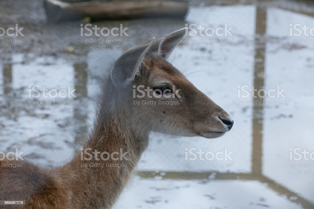 The young deer in the contact zoo stock photo