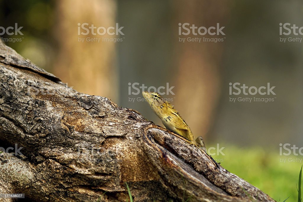 The young dragon royalty-free stock photo