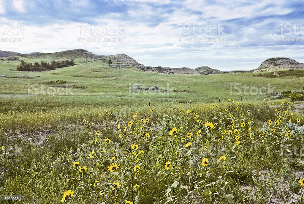 Badland Meadow and Wildflowers royalty-free stock photo