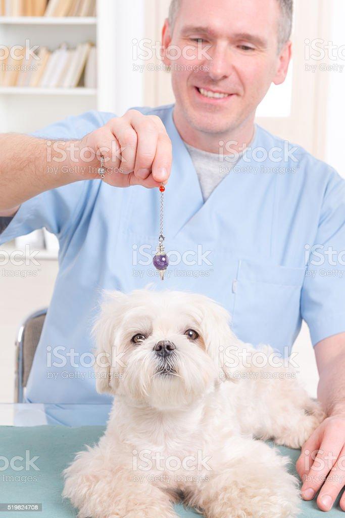 Therapist or vet using pendulum stock photo