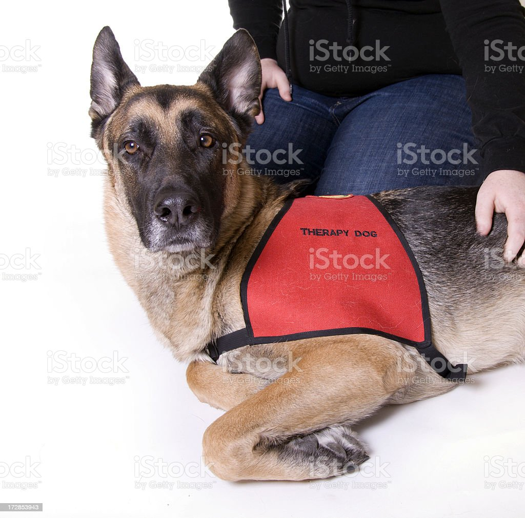 Therapy Dog royalty-free stock photo