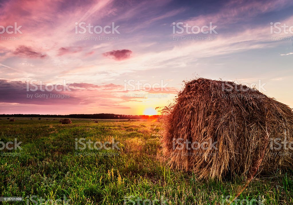 hay sunset. stock photo