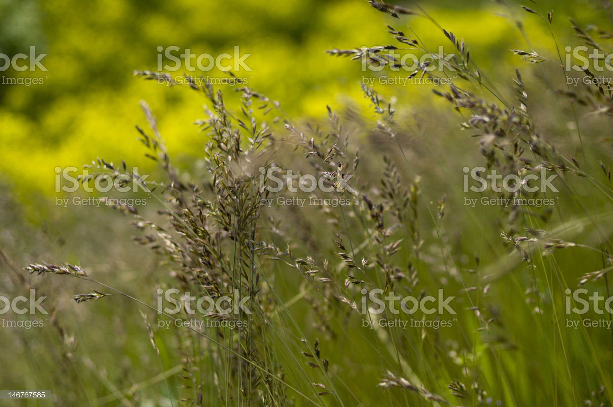 Hay royalty-free stock photo