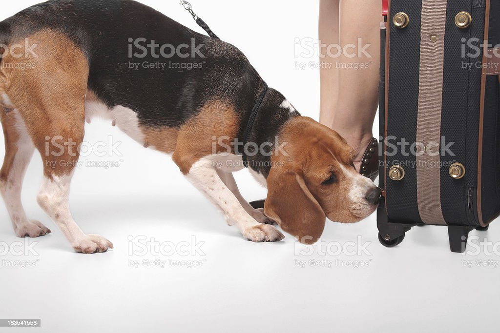 There's something in here stock photo