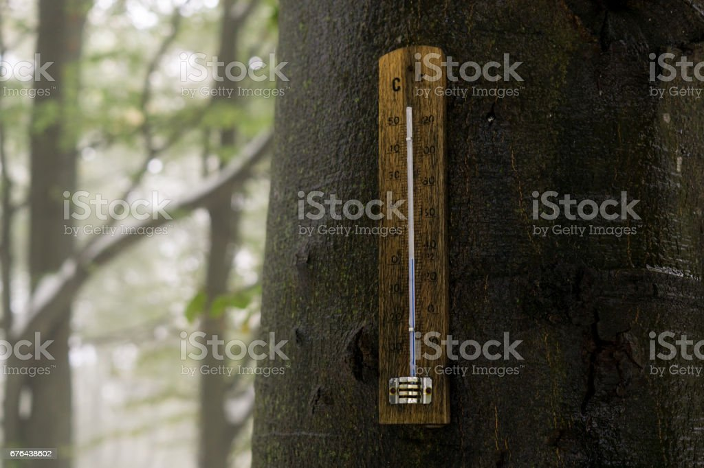 Thermometer on the tree in woods. stock photo
