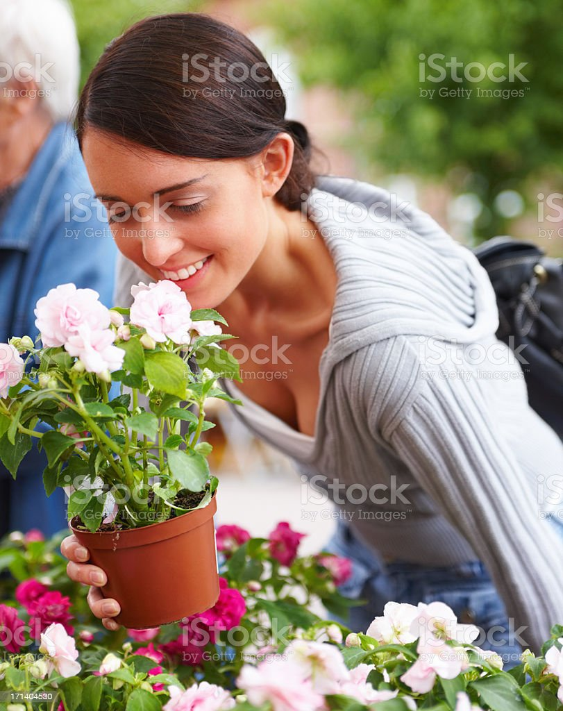 These blooms look great! stock photo