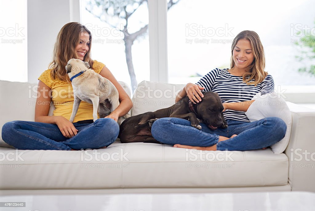 These little guys are a handful! stock photo