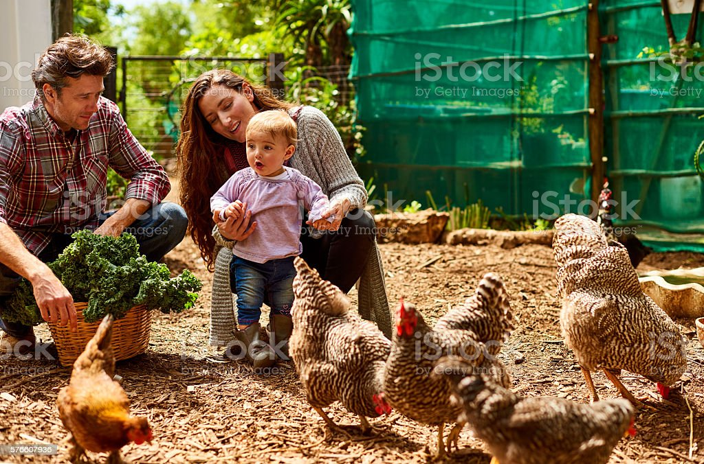 They're an organic family stock photo