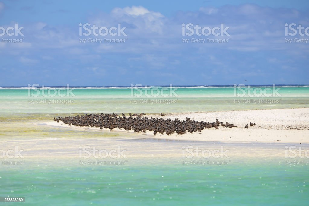 Thick cloud of birds stock photo