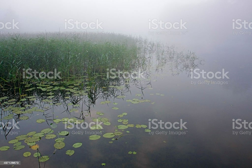 Thick fog creates mystery over tranquil remote lake stock photo