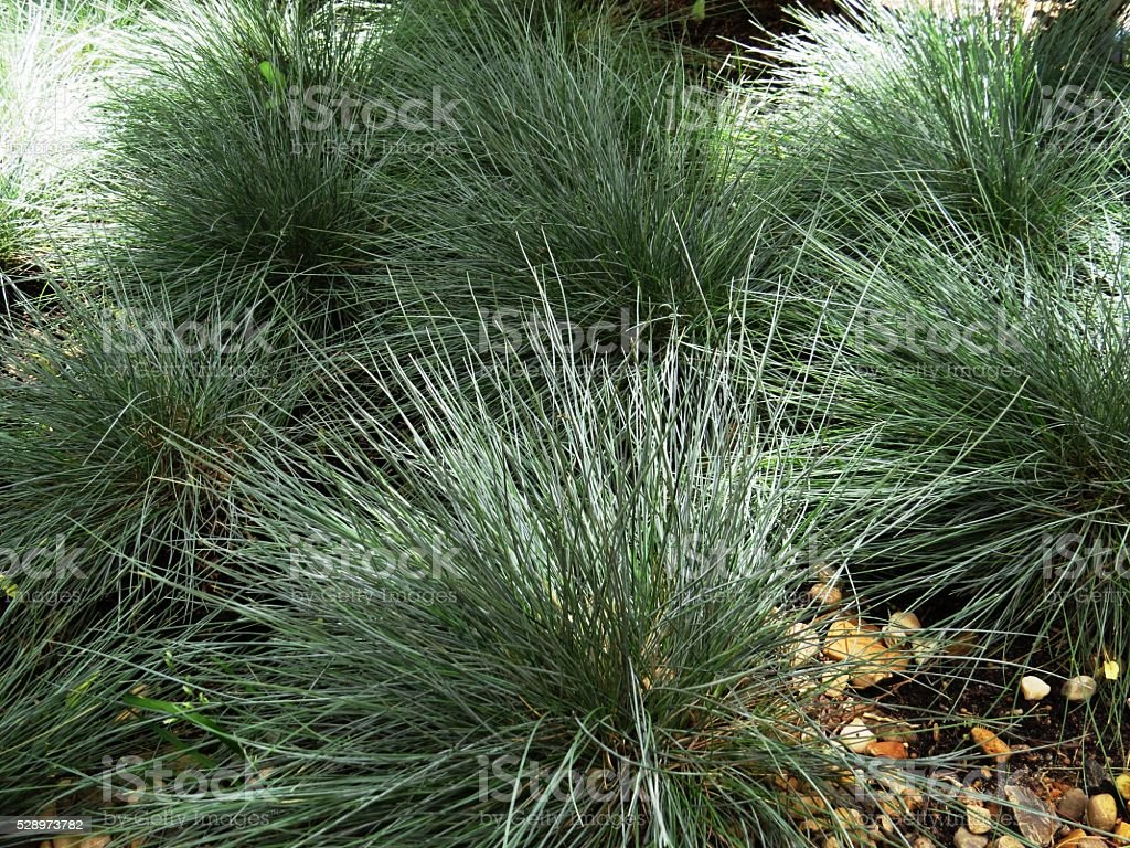 thick green grass royalty-free stock photo
