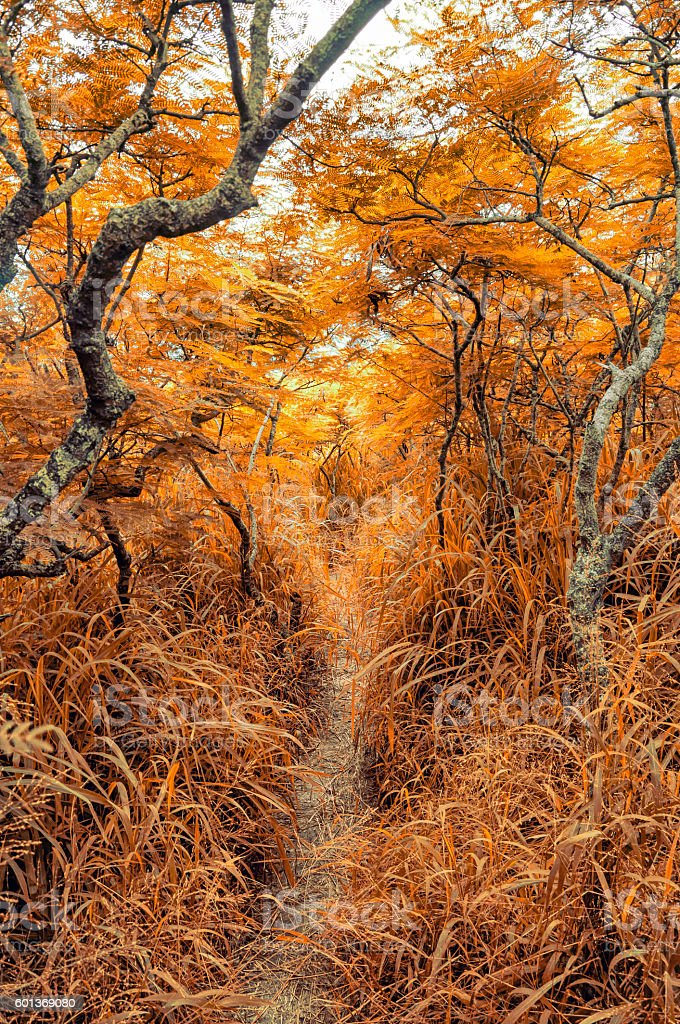 Thick Overgrown Jungle Trail in Autumn stock photo