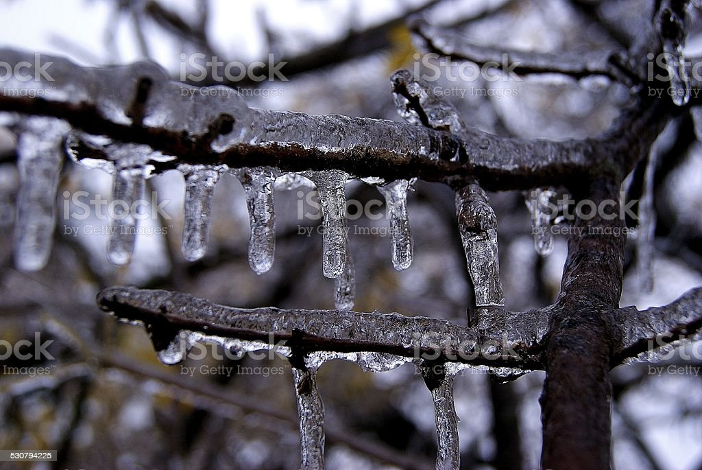 Thickened Ice Branches royalty-free stock photo