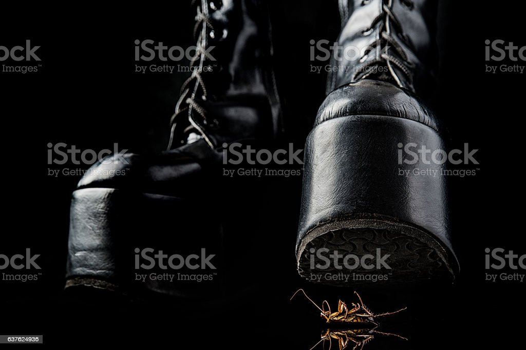 Thigh high boots trample cockroach. stock photo