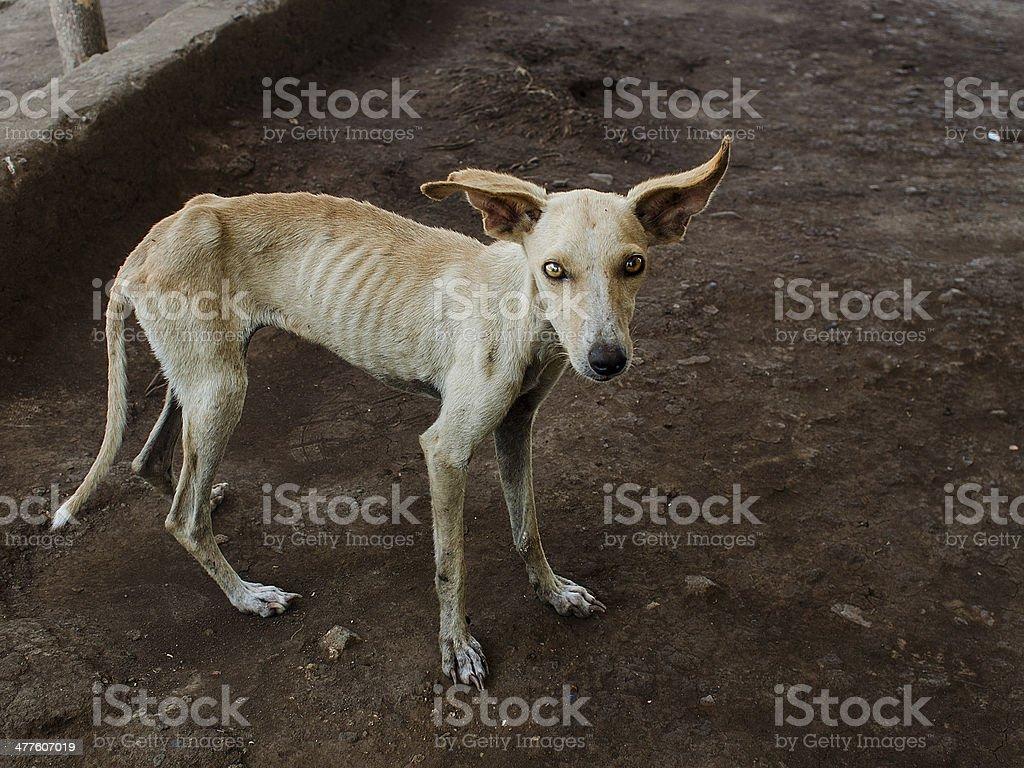 Thin dog stock photo