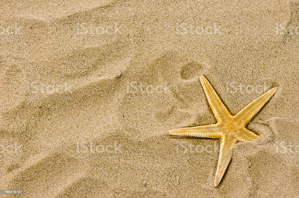 Thin starfish partly buried in the sand royalty-free stock photo