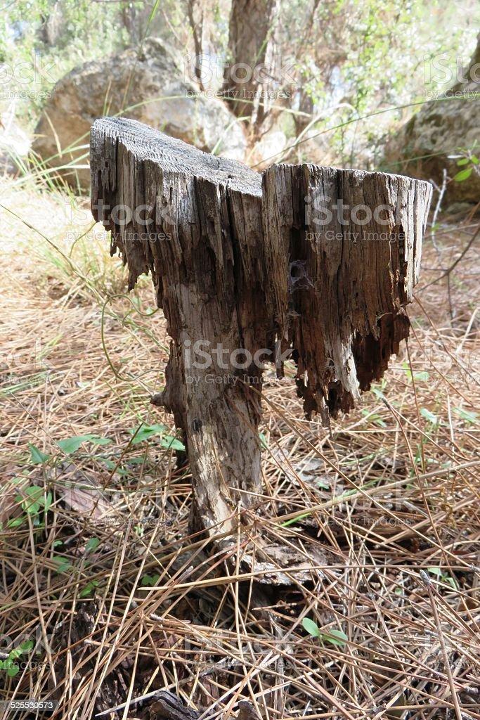 Thin stem stock photo