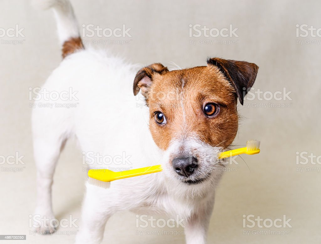 Think about dog's teeth health stock photo