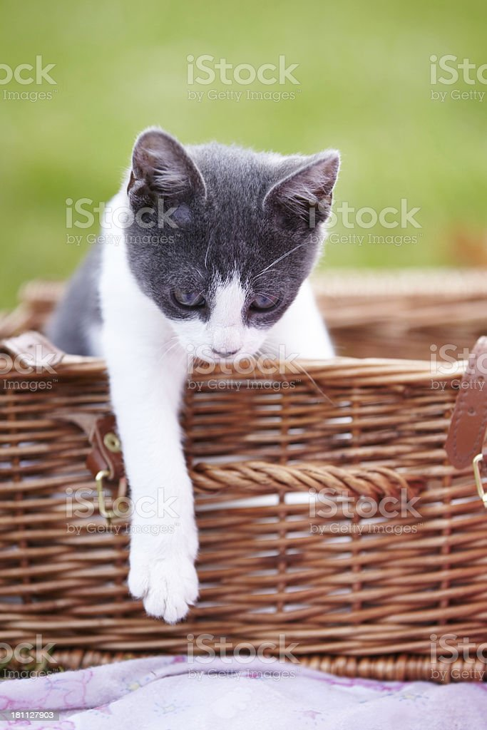 I think I'll get out now... royalty-free stock photo