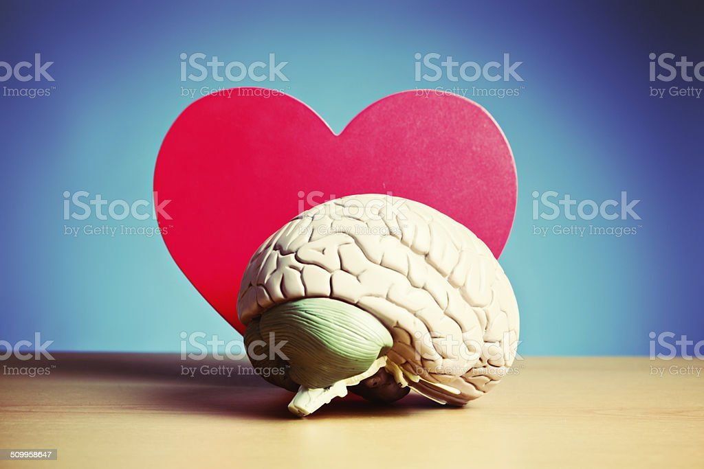 I think I'm in love! Model brain and heart stock photo