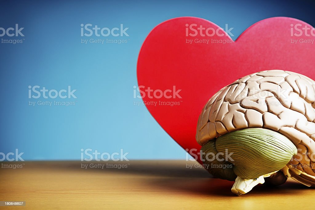 I think I'm in love: model brain with cut-out heart royalty-free stock photo