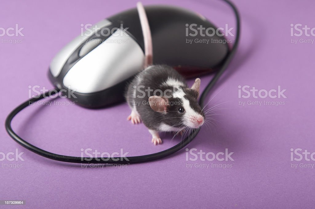 I think I'm in love on purple stock photo