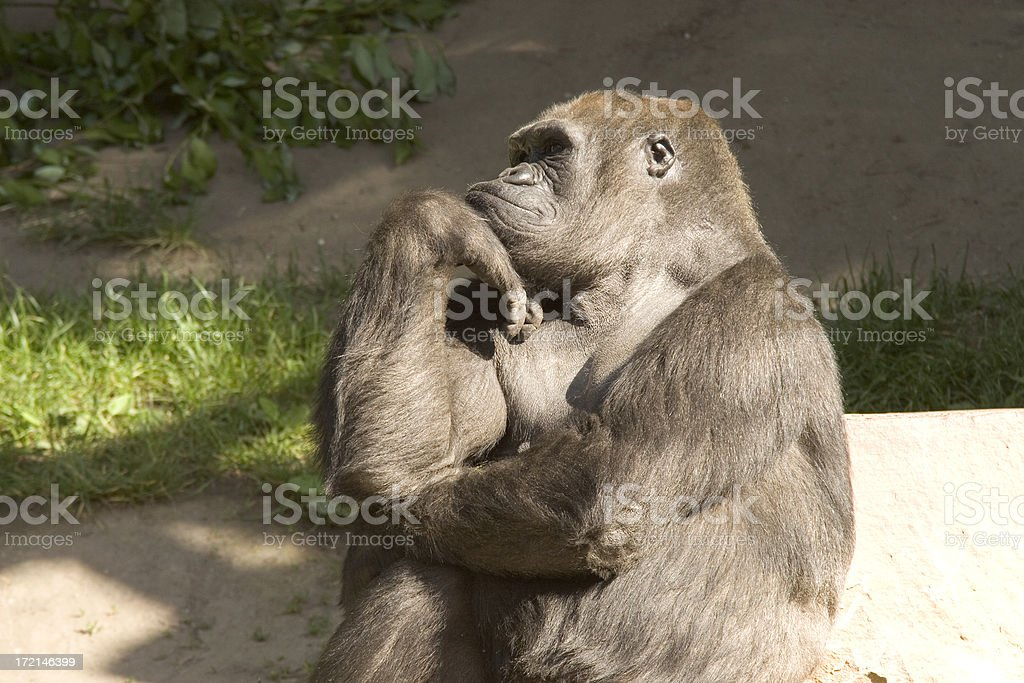 Thinking about you royalty-free stock photo